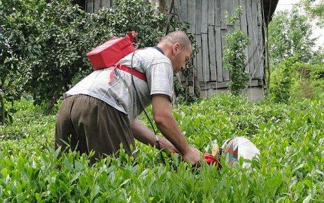 2011 Yılı Yaş Çay Fiyatı açıklandı