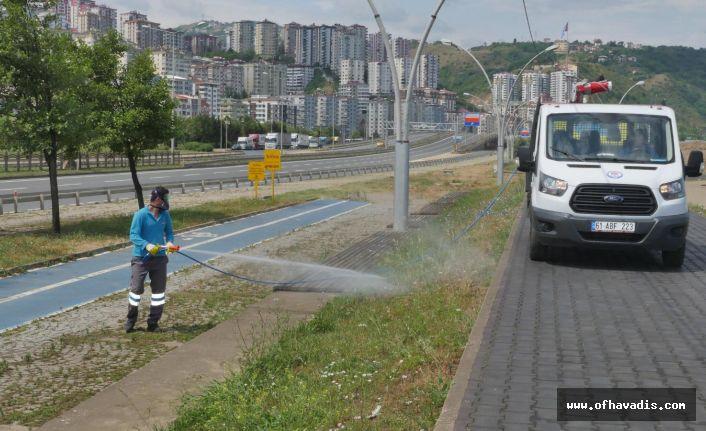 Büyükşehir vektörle mücadeleye hız verdi