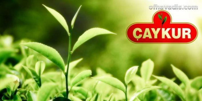 Çay arazilerini budama 1/7 oranında yapılacak