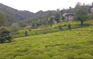 Bakan Soylu'dan 81 Valiliğe Çay genelgesi