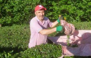 Çay üreticileri çaylığa girdi
