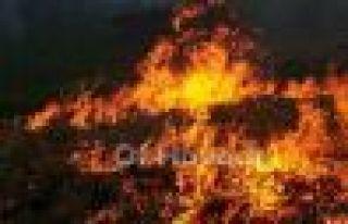 Fındıkoba'da 20 hektar arazi ve 2 ev yandı