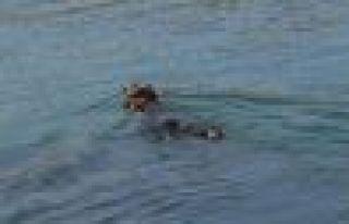 Of'ta 4 gün denizde kayıp kurbanlığı Haluk...
