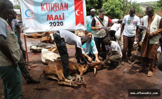 Ofluların kurbanları Afrika'ya Cansuyu oldu