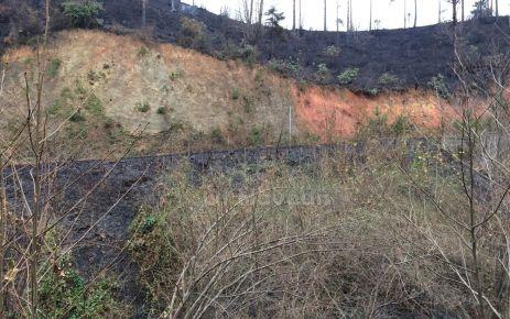 Çamburnu'ndaki orman yangını söndü