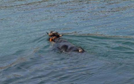 Of'ta 4 gün denizde kayıp kurbanlığı Haluk Levent satın aldı