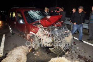Of'ta Kaza; çoban yaralandı 17 koyun telef oldu