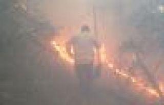 Kış ortasında Of'ta arazi yangınları