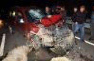 Of'ta Kaza; 17 koyun telef oldu, bir kişi yaralandı