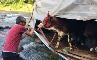 Kamyon dereye uçtu sürücü ve hayvanlar yaralandı